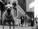 我见过的人越多,我就越喜欢狗|日签
