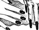 人死后真的还会长头发和指甲吗?