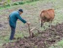 土地确权结束后,农民将面临4个选择,最后一种赚得最多,你咋选