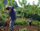 为啥农民收入低?这4点原因不容忽视,再不改变,补贴再多都没用