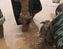 村民13只羊深陷泥潭 7名消防员徒手刨泥6小时救羊