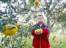 13岁男童患病输血11年 志愿者帮他家网售柑橘筹钱