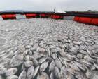 海上养殖场发生鱼集体死亡事件