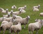 680只扶贫羊被拖三年才下发 新疆新和县33人被处理