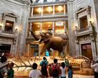 博物馆悖论:多数服从少数?