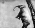 被吊死的大象玛丽:残忍而伤感的往事