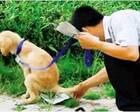 """文明养狗,不仅要""""软约束""""还需""""硬措施"""""""