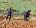 为啥越来越多的农民不想再继续种地?专家的解释还是挺有道理的!