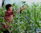 河南温县因地制宜产业扶贫