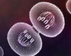 弄懂细胞分裂的这一规律,你才知道为什么有些人不容易老,好懂!