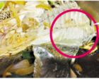 鲈鱼脂肪为啥绿色? 专家:或因为不明代谢障碍引致