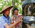 福建:发展林下经济 助推精准扶贫