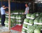 瓜农1.5万斤西瓜滞留 警察在工作群帮忙两小时卖完
