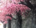 北龙温泉:冰雪中享受温暖的春意