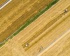 乡村振兴战略开局有力 农业农村发展亮点频现
