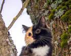 双色脸小猫出生就遭遗弃 新主人却将它视若珍宝
