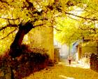 云南腾冲江东银杏村:一个金色的童话世界