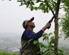 """老人21年种出40万棵树 将荒山变成""""金山银山"""""""