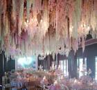 霍建华林心如婚礼晚宴挂满紫藤 花串长5000米