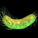 科學家發現極強悍的遠古細菌,戰斗力爆表,可對抗超級病毒