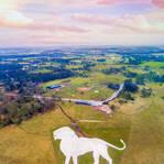 英动物园打造壮观白狮地景画 共消耗800吨粉笔