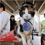 日本第二任猫站长