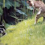 小区上演猫蛇大战