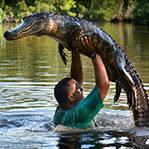 惊!导游下水举鳄鱼