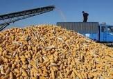 收购玉米为什么要被判刑?