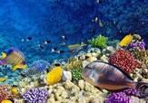 """你还在支付宝种树呢?我国科学家都在海底""""植树造林""""了~"""