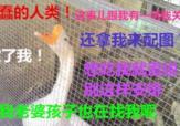[FUN来了]婆媳争吵令男子跳河 无辜大鹅路过被逮捕 07月17日