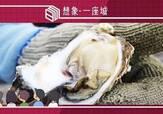 台湾王功:一颗废弃牡蛎壳的再生,改变了这个沿海渔村