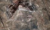 茅台镇发现中国侏罗纪最大蜥脚类足迹群