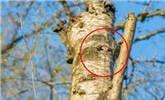 小伙拍了张树干照里面却藏着双眼睛