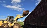 近百辆大卡车草原排队抢运羊粪丨组图