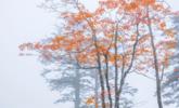 峨眉山雾中秋色丨组图