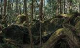 """实拍日本""""自杀森林"""""""