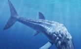 人类历史上最大的鱼类