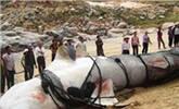 喀纳斯湖水怪被证实,体型巨大!