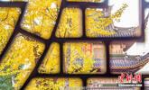 惊艳!千年古寺满树银杏金黄