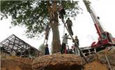 大树莫名倒下 村民挖地三尺被吓傻