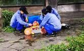 """在台风""""安比""""中过12岁生日 大熊猫思雪的寿宴不错啊!"""