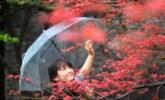 秋日扬州|组图