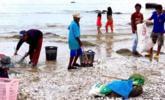 被冲上岸的海鲜泛滥成灾,泰国村民捡不过来|组图