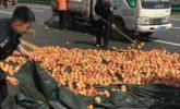 1.5吨苹果散落路面 警察帮捡拾