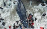 鲸鱼搁浅后 民众围了上来