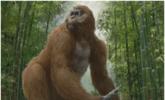 史上最大的猿,步氏巨猿站立身高超过3米