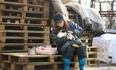女子为收养流浪狗卖房子 曾因车祸惨遭毁容失去双手