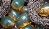 女子野外发现一堆透明绿蛋,险丧命