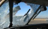 飞机152米高空撞上野兔和老鹰后迫降|组图